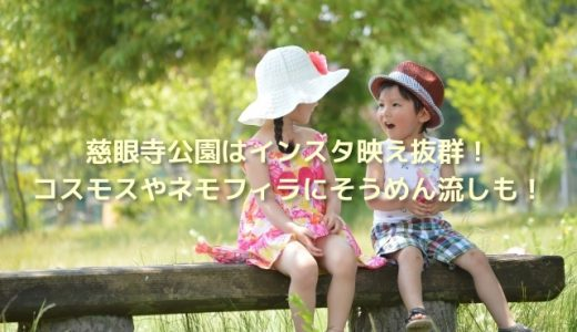 慈眼寺公園はインスタ映え抜群!コスモスやネモフィラにそうめん流しも!